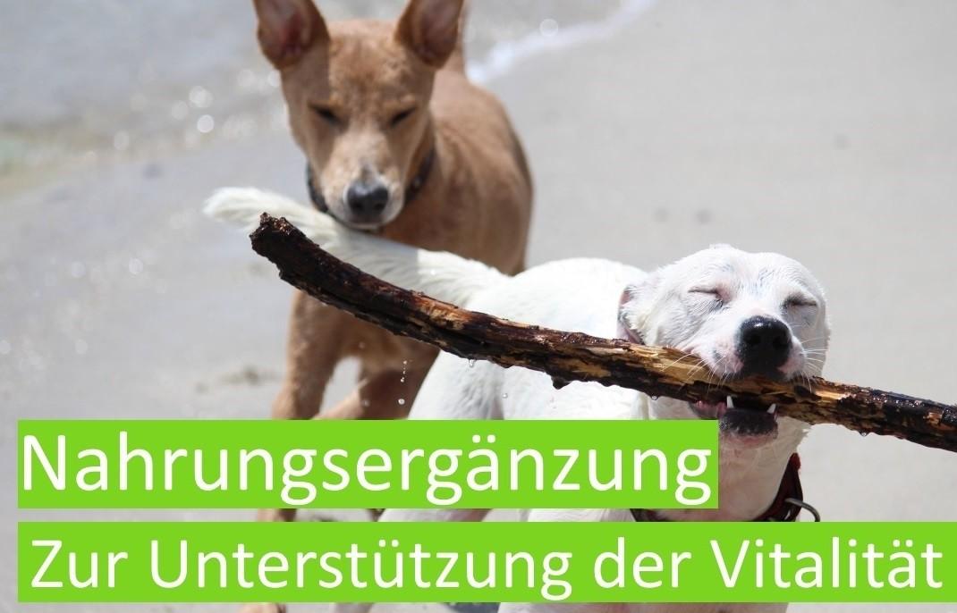 Nahrungsergänzung Hundefutter